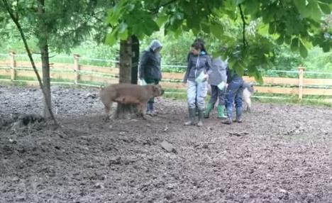 Schüler bei den Schweinen