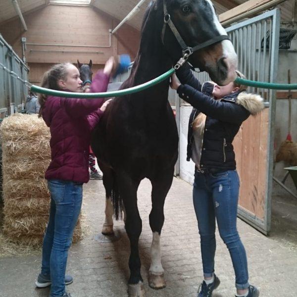 Pferdestall