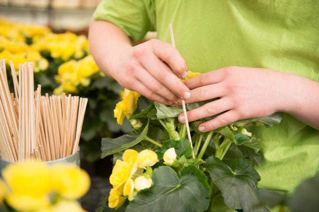Zierpflanzenpflege